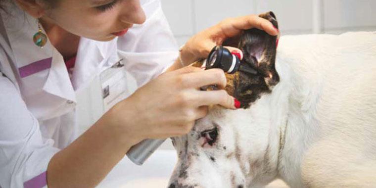 Dermatologia del cane e del gatto
